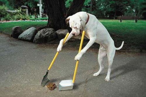 Disposing of Poop – pet care