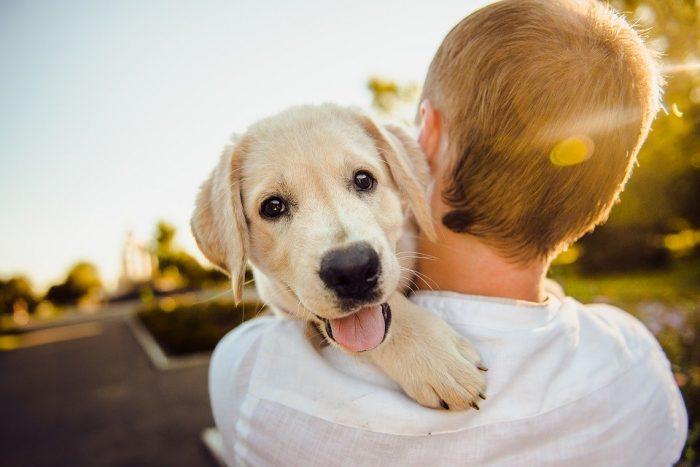 Adorable Animal Dog – Free photo on Pixabay