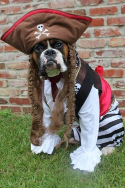 12 Costumes That Prove Boxer Dogs Always Win At Halloween – PupsToday