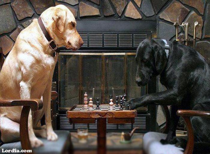 58 Funny Dogs Pics – buzzsharer.com