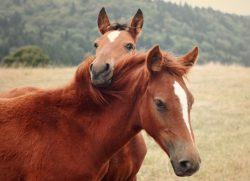 34 Most Random, Amazing And Bizarre Facts About Horses