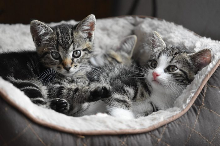 Cat Kittens Small – Free photo on Pixabay