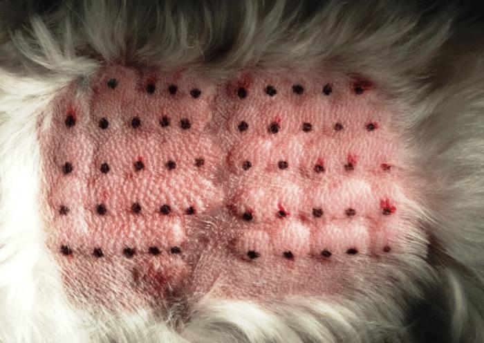 Dermatitis dog – Google Search