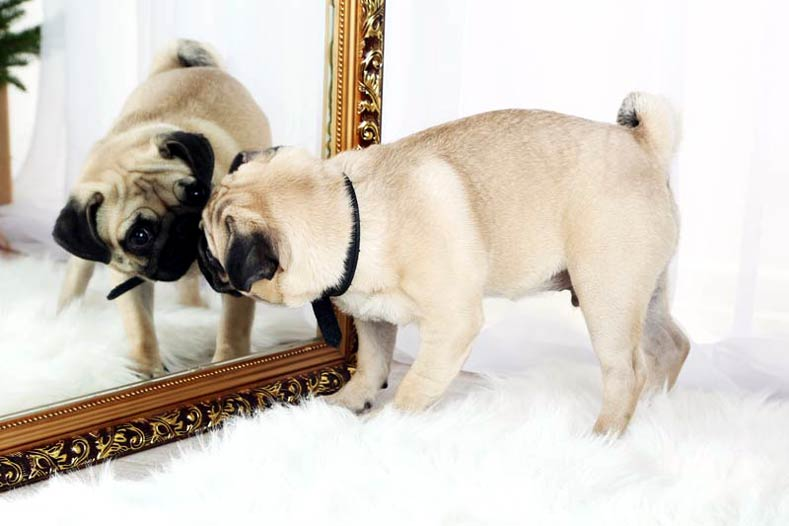 dog and mirror ]