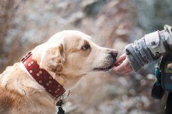 Dog Friendship Nature