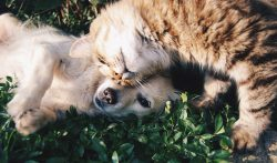 Friends Cat And Dog Cats Dogs –