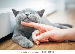 Kitty Cat Kitten –