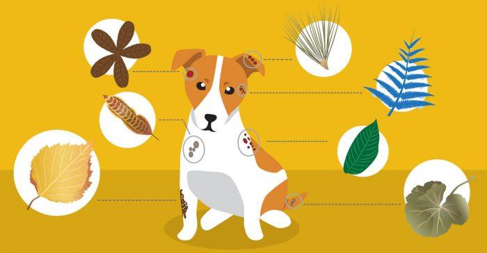 Nutritional Dermatitis dog