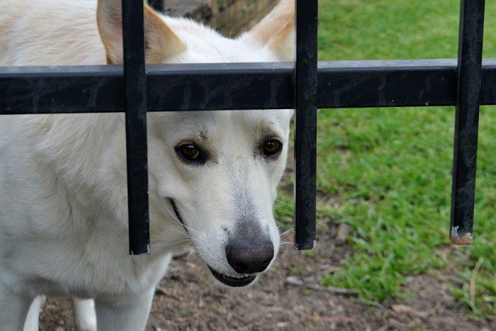 Security Guard Dog Mammal