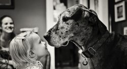 12 Things They Don't Tell You About Great Danes