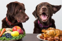 What Fruits and Vegetables Can Your Dog Eat? – BuzzSharer.com
