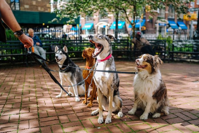 four dogs on park photo