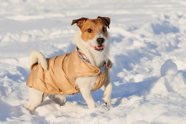 Keep Your Dog Warm: A Cold Weather Guide