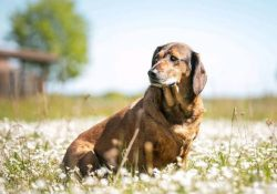 Caring for a hunting Alpine reed will not cause many difficulties for you, since the molting per ...