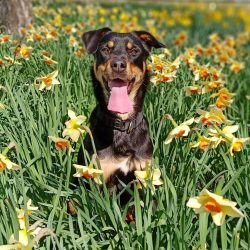 Also, representatives of this breed can develop eye diseases, especially since this problem is r ...