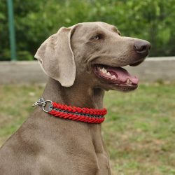 The best purpose of Weimaraners is hunting for this very purpose and the breed was bred.