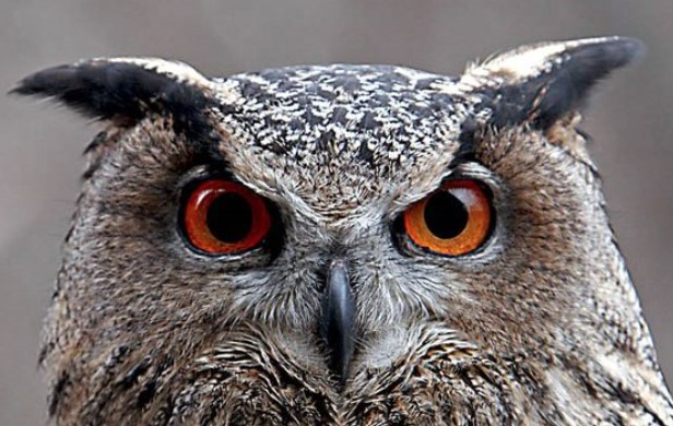 The owl was once a symbol of the ability not to feel fear of the dark, that is, to know the secr ...