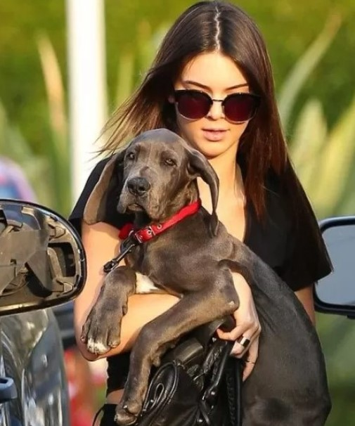 16 Celebrities Who Are Major Great Dane Lovers – Famous Quotes & Sayings   QuoteTab