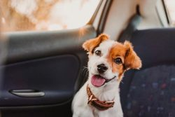 Is Pet Insurance Worth It? [Costs, Benefits & A Free Quote]