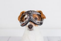 Taking Your Dog On An Airplane [A Comprehensive Guide]