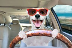 The 6 Best Dog Car Seats For Jack Russells [Shopping Guide]