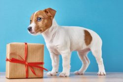 The 6 Best Personalized Gifts For Jack Russells [Personalize Now]